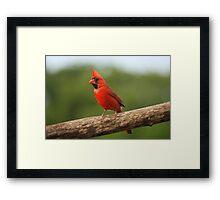 Go Cardinals! Framed Print