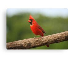Go Cardinals! Canvas Print