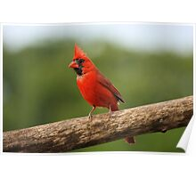 Go Cardinals! Poster
