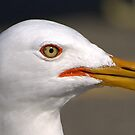 Seagull by BigD