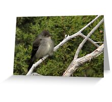 Western Wood Peewee Greeting Card