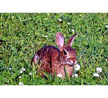 Bunny Lunch Photographic Print