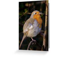 European robin Greeting Card