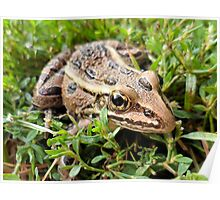 Brown Frog in the Grass - Nature and Wildlife Photography Poster