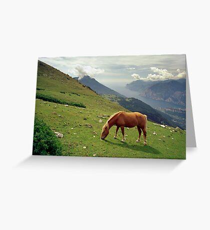 Horse at Monte Stivo, Italy Greeting Card