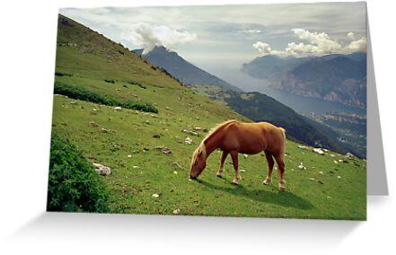 Horse at Monte Stivo, Italy by Lenka