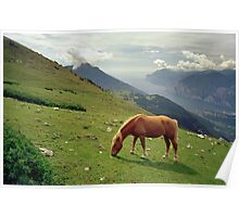 Horse at Monte Stivo, Italy Poster
