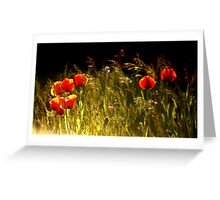 Poppies Hard Light Greeting Card