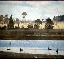 Swan Lake by Kitsmumma