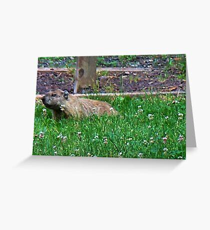 Mr. Goundhog Greeting Card