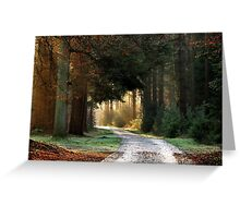 Cycling towards the morning light Greeting Card