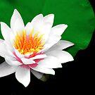 Bloom Of Springs Love by velveteagle