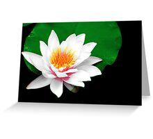 Bloom Of Springs Love Greeting Card