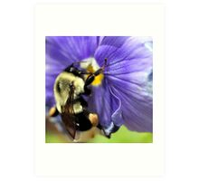 Bumble Bee on Pansy Art Print