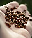 Lady Beetles by SD Smart