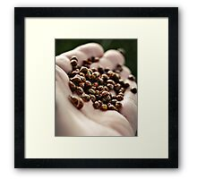 Lady Beetles Framed Print