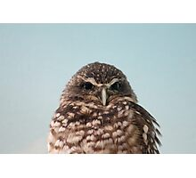 Judging Burrowing Owl Photographic Print