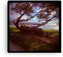 holga madness.....twisted tree down by the sea Canvas Print