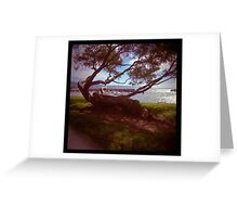 holga madness.....twisted tree down by the sea Greeting Card