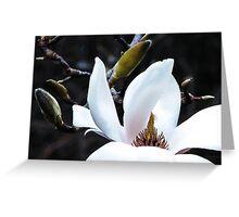 Magnificent Magnolia Greeting Card