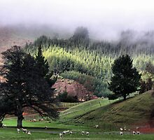 A Country Life by Varinia   - Globalphotos