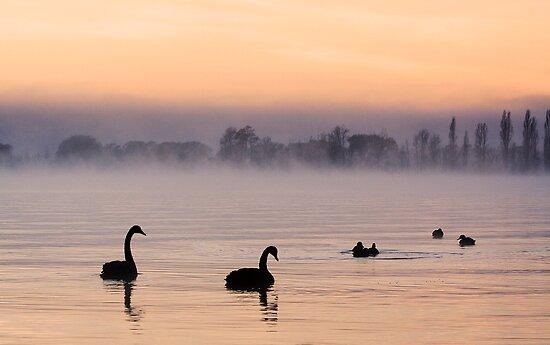 Swan Lake. by DaveBassett