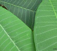 Plumeria Leaf Study (pic1) by Chris McKinney