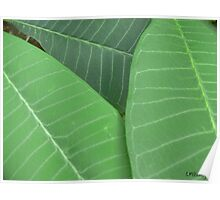 Plumeria Leaf Study (pic1) Poster