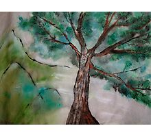 Tree on Rice Paper Photographic Print
