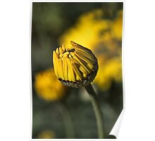Daisy Yellow Poster