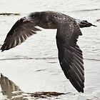 MAYDAY MAYDAY .RUNNING OUT OF PETREL by JAMES LEVETT