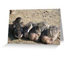 Four Little Ducks Greeting Card
