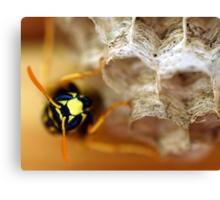 Wasp 2 Canvas Print