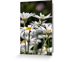 Heights of daisies Greeting Card