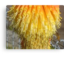 Bee at the Bottom Canvas Print