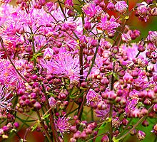 Flowers by Kenart