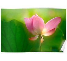 Lotus #79 Poster