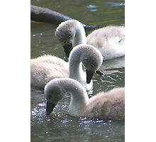 Synchronised Signets........ Photographic Print