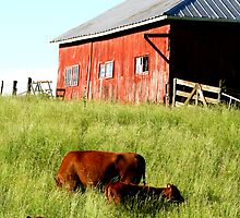 Grazing by Darla  Logsdon
