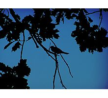 SILHOUTTE Photographic Print