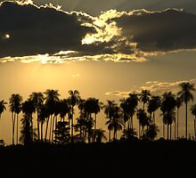palmset by Ryan Bird