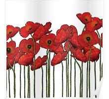 Poppies white Poster