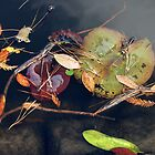 Autumn Flotsam by Barry Goble