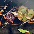 Autumn Flotsam by Barry Goble