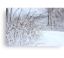 Winter's Spell III Canvas Print