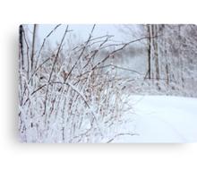 Winter's Spell III Canvas Print