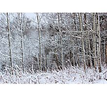 Winter's Spell IV Photographic Print