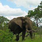 Kruger Elephant by Natalie Broome