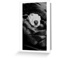 Adorable Sleeping Greyhound, Chihuahua Mix Puppy Greeting Card
