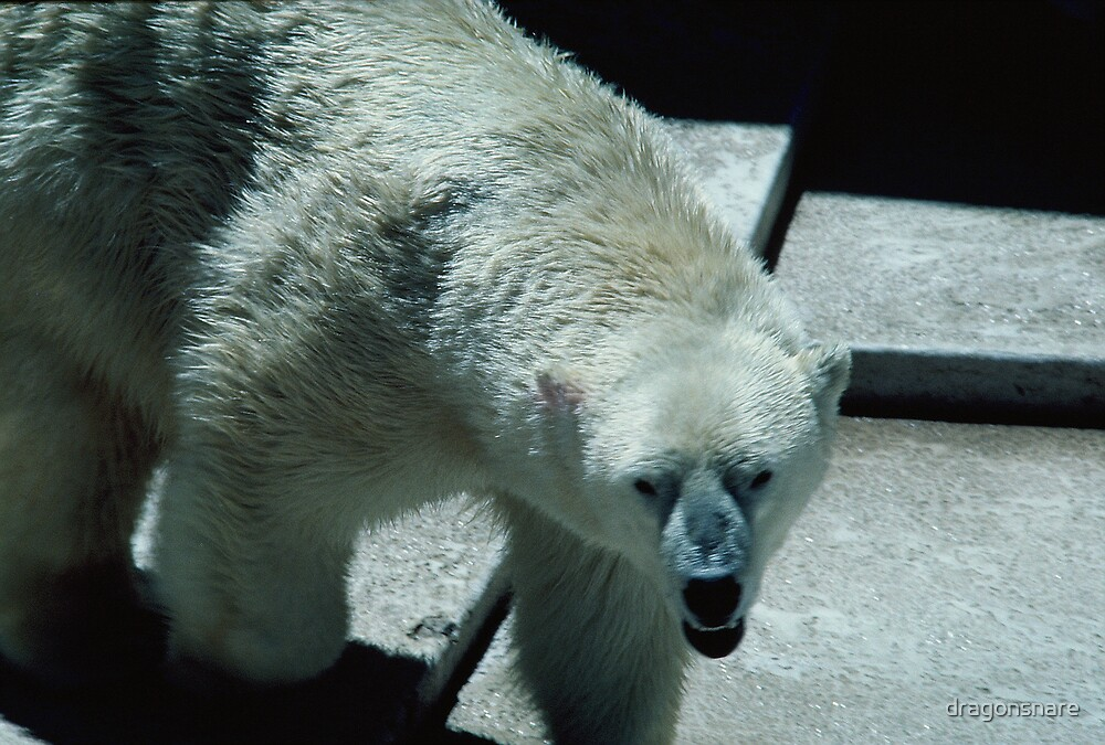 Polar Bear by dragonsnare
